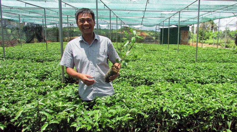 Giống cà phê đầu dòng chất lượng tại Bảo Lộc Lâm Đồng