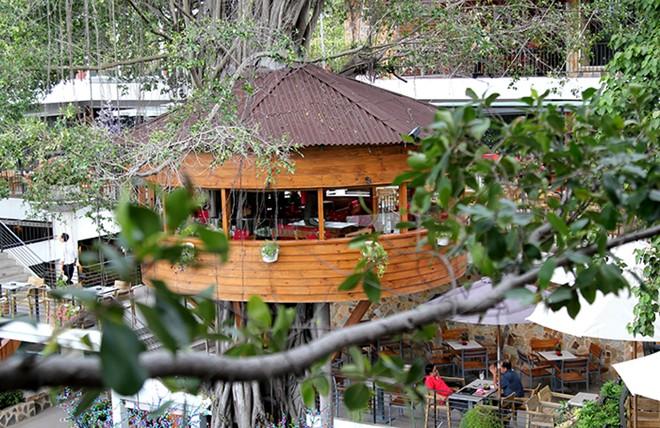 Top 10 quán cafe sân vườn đẹp Du Miên Café